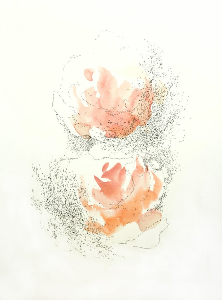 Pink Rose Pair, 15 x 11 inches, acrylic ink and pen on paper, 2016