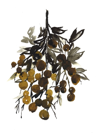 longan-branch-lo